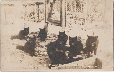 , ?? Silver Fox Ranch, Mt Edward Road, Ch'Town, P.E.I. J.B Roxbough Prop. Copyright. (0157), PEI Postcards