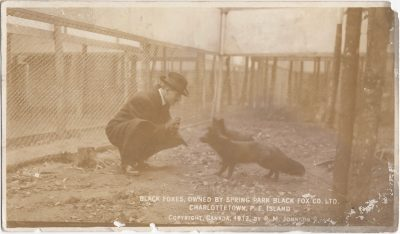 , Black Foxes, owned by Spring Park Black Fox Co., Ltd, Charlottetown, P.E. Island Copyright Canada     1912 by R.M. Johnson (0215), PEI Postcards