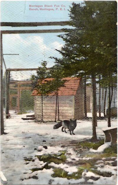 , Montague Black Fox Co. Ranch, Montague, P.E.I. (0325), PEI Postcards