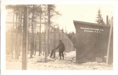 , Rosebank Fur Farms, Ltd. Southport, P.E.I. (0333), PEI Postcards