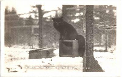 , Rosebank Fur Farms, Limited, Southport, P.E.I. (0337), PEI Postcards