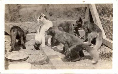 , Rosebank Fur Farms, Limited, Southport, P.E.I. (0338), PEI Postcards