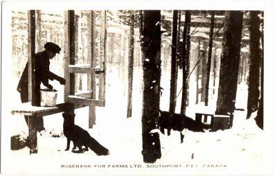 , Rosebank Fur Farms Ltd., Southport, P.E.I. Canada (0336), PEI Postcards