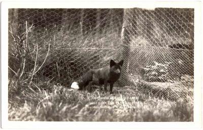 , Copyright applied for 1919. Rosebank Fur Farms Limited. Southport P.E.I. Canada (0342), PEI Postcards