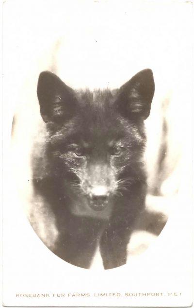 , Rosebank Fur Farms, Limited, Southport, P.E.I. (0340), PEI Postcards