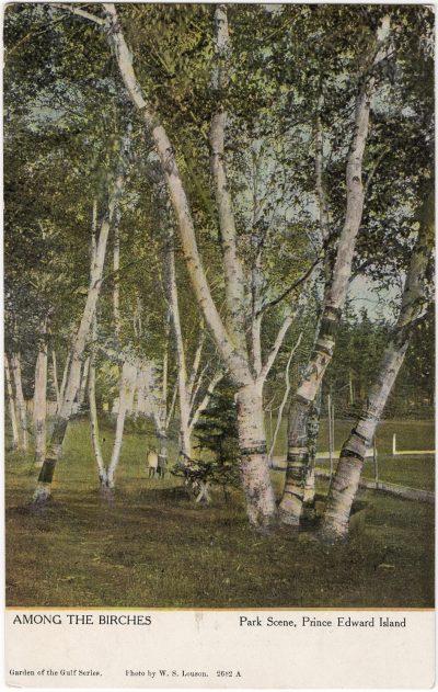 , Among the Birches, Park Scene, Prince Edward Island (0467), PEI Postcards