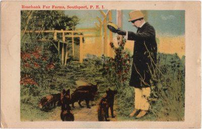 , Rosebank Fur Farms, Southport, P.E.I. (0837), PEI Postcards