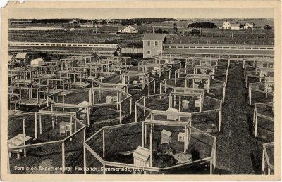 , Dominion Experimental Fox Ranch, Summerside, P.E.I. (0839), PEI Postcards