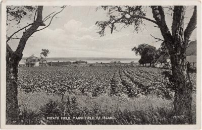 , Potato Field, Marshfield, P.E. Island. (0879), PEI Postcards