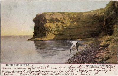 , Gathering Shells, Prince Edward Island (0877), PEI Postcards