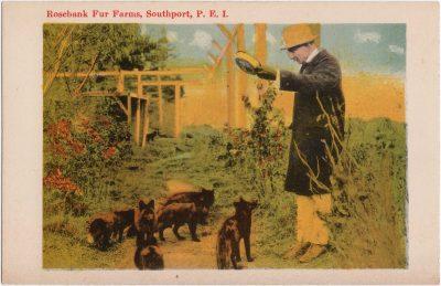 , Rosebank Fur Farms, Southport, P.E.I. (0884), PEI Postcards