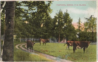 , Pastoral Scene, P.E. Island. (0893), PEI Postcards