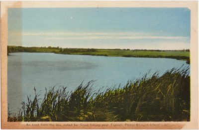 , An Inlet from the sea, noted for Trout fishing near Tignish, Prince Edward Island. (0977), PEI Postcards