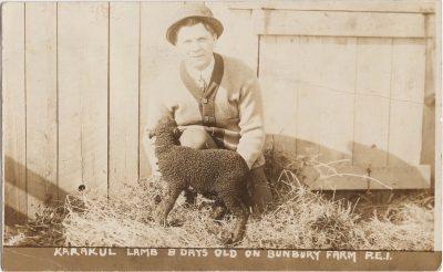 , Karakul lamb 8 days old on Bunbury Farm P.E.I. (1114), PEI Postcards