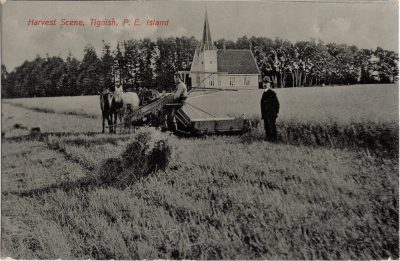, Harvest Scene, Tignish, P.E. Island (1102), PEI Postcards