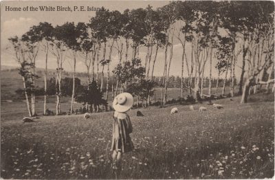 , Home of the White Birch, P.E. Island (1150), PEI Postcards