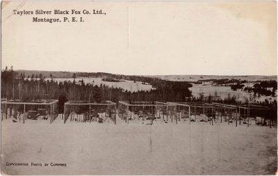 , Taylors Silver Black Fox Co. Ltd., Montague, P.E.I. (1149), PEI Postcards