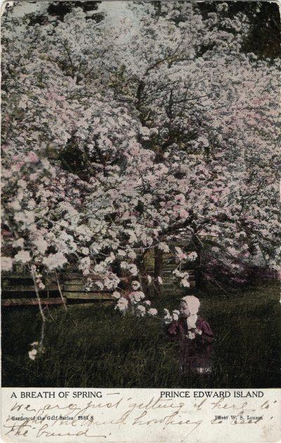 , A Breath of Spring Prince Edward Island (1207), PEI Postcards