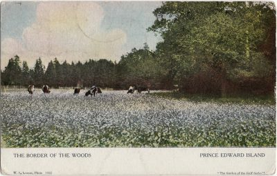 , The Border of the Woods Prince Edward Island (1254), PEI Postcards