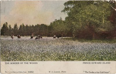 , The Border of the Woods Prince Edward Island (1255), PEI Postcards