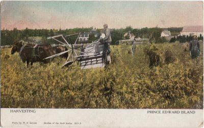 , Harvesting Prince Edward Island (1259), PEI Postcards