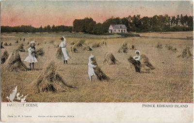 , Harvest Scene Prince Edward Island (1261), PEI Postcards