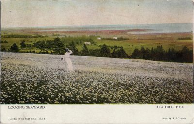 , Looking Seaward Tea Hill, P.E.I. (1242), PEI Postcards