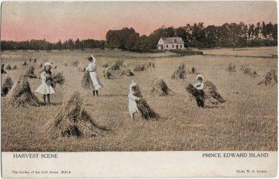 , Harvest Scene Prince Edward Island (1245), PEI Postcards