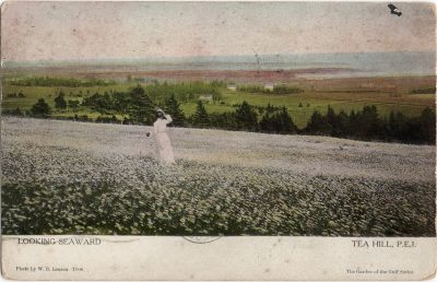 , Looking Seaward Tea Hill, P.E.I. (1246), PEI Postcards