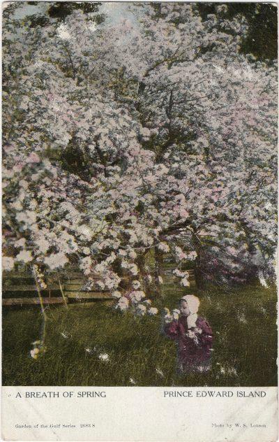 , A Breath of Spring Prince Edward Island (1206), PEI Postcards