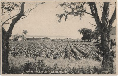 , Potato Field, Marshfield, P.E. Island (1302), PEI Postcards
