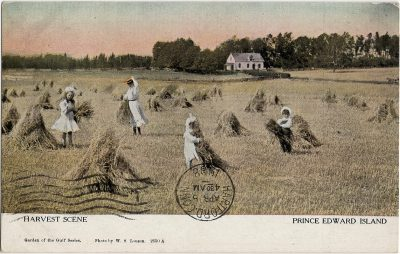 , Harvest Scene Prince Edward Island (1316), PEI Postcards