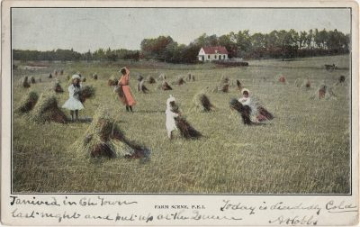 , Farm Scene, P.E.I. (1317), PEI Postcards