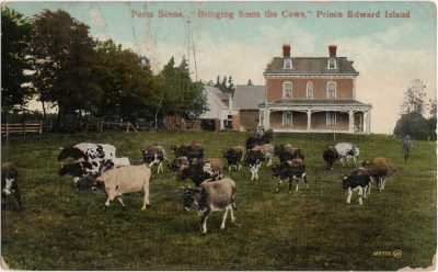 ", Farm Scene, ""Bringing home the Cows,"" Prince Edward Island (1348), PEI Postcards"