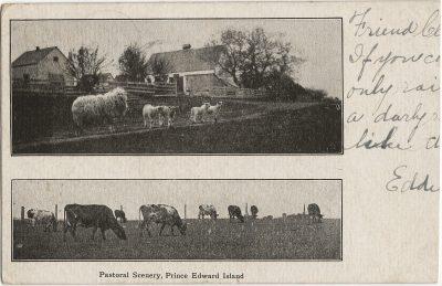 , Pastoral Scenery, Prince Edward Island (1389), PEI Postcards