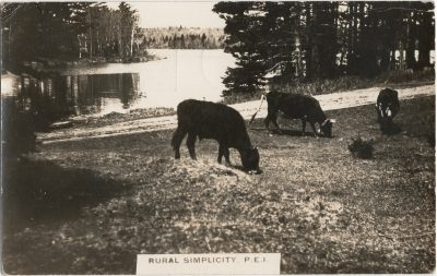 , Rural Simplicity, P.E.I. (1417), PEI Postcards