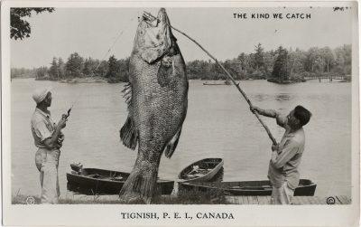 , The Kind We Catch. Tignish, P.E.I., Canada. (1408), PEI Postcards
