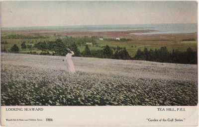 , Looking Seaward Tea Hill, P.E.I. (1452), PEI Postcards