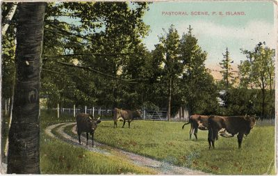 , Pastoral Scene, P.E. Island. (1455), PEI Postcards
