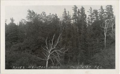 , Anne's Haunted Woods, Cavendish, P.E.I. (1529), PEI Postcards