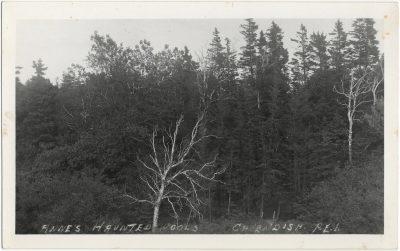 , Anne's Haunted Woods, Cavendish, P.E.I. (1530), PEI Postcards