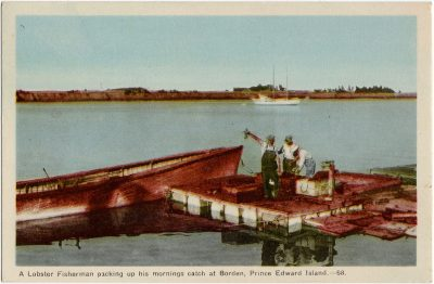, A Lobster Fisherman packing up his mornings catch at Borden, Prince Edward Island. (1618), PEI Postcards