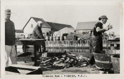 , Tignish Run – Tignish, P.E.I. (1728), PEI Postcards