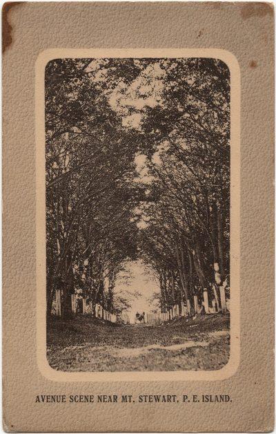 , Avenue Scene Near Mt. Stewart, P.E. Island. (1735), PEI Postcards