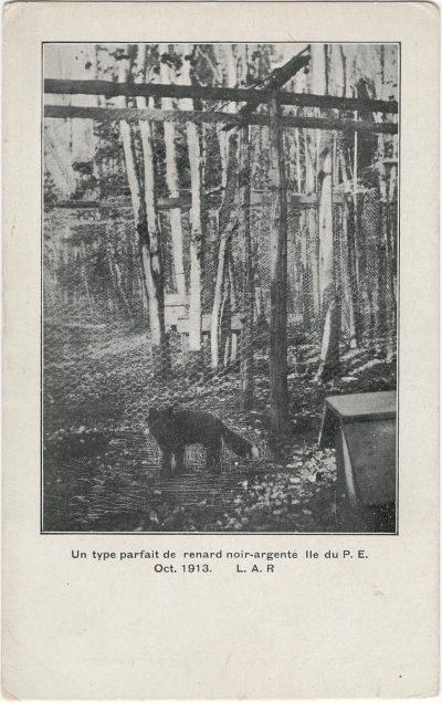 , Un type parfait de renard noir-argente. Ile due P.E. Oct. 1913 L.A.R. (1778), PEI Postcards