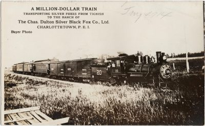 , A Million Dollar Train transporting silver foxes from Tignish to the ranch of the Chas. Dalton     Silver Black Fox Co., Ltd., Charlottetown, P.E.I. (1789), PEI Postcards