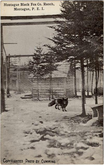 , Montague Black Fox Co. Ranch, Montague, P.E.I. (1857), PEI Postcards