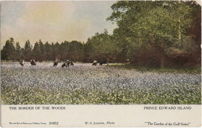 , The Border of the Woods Prince Edward Island (1909), PEI Postcards
