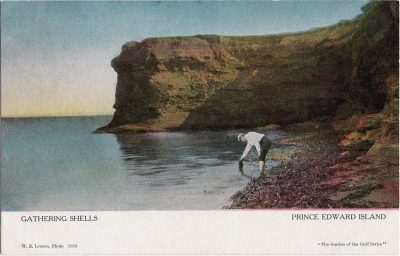 , Gathering Shells Prince Edward Island (1924), PEI Postcards