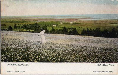 , Looking Seaward Tea Hill, P.E.I. (1913), PEI Postcards